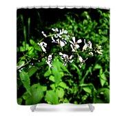 Wild Missouri Flowers Shower Curtain