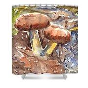 Wild Mushrooms Shower Curtain