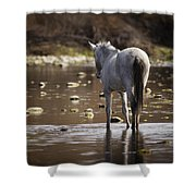 Wild Mustang On The River  Shower Curtain