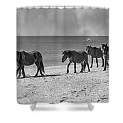 Wild Mustangs Of Shackleford Shower Curtain