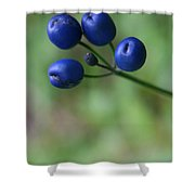 Wild New Hampshire Bluebead Lily Shower Curtain