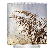 Wild Oats 2am-110432 Shower Curtain