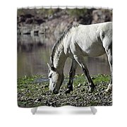 Wild On The River  Shower Curtain