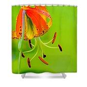 Wild Orange Lilies Shower Curtain
