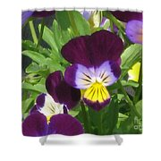 Wild Pansies Or Johnny Jump-ups 1 Shower Curtain