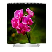 Wild Pea Flower Shower Curtain by Robert Bales