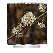 Wild Pear Shower Curtain