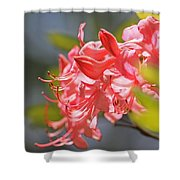Wild Pink Azalea At Moore State Park Shower Curtain