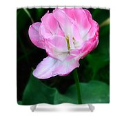 Wild Pink Rose Shower Curtain