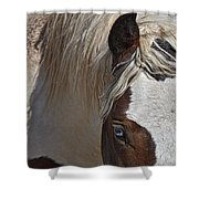 Wild Pinto Shower Curtain