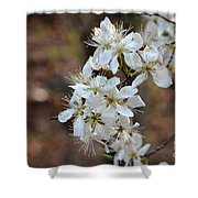 Wild Plum Blooms Shower Curtain