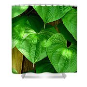 Wild Potato Vine Shower Curtain