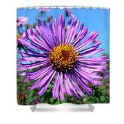 Wild Purple Aster Shower Curtain