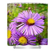 Wild Purple Asters Shower Curtain