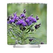 Wild Purple Shower Curtain