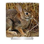 Wild Rabbit Shower Curtain