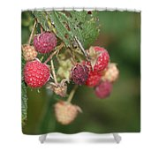 Wild Raspberrys Shower Curtain