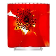 Wild  Red Rose Extrem Macro Shower Curtain