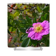 Wild Rose 3 Shower Curtain