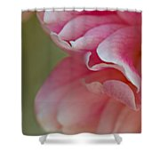 Wild Rose Shower Curtain