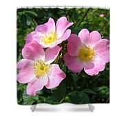 Wild Roses 1 Shower Curtain