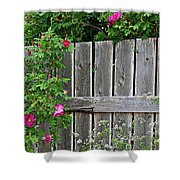 Wild Roses And Weathered Fence Shower Curtain
