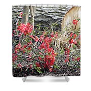 Wild Roses In Wood Shower Curtain