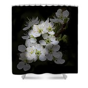 Wild Roses Shower Curtain