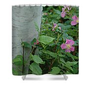 Wild Roses With Birch Tree Shower Curtain