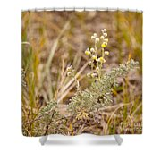 Wild Sage Wormwood Artemisia Figida Yellow Flower Shower Curtain