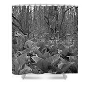 Wild Skunk Cabbage Bw Shower Curtain