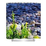 Wild Snapdragons  Shower Curtain