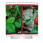 Wild Strawberry Plant - Fragaria Virginiana Shower Curtain