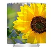 Wild Sunflower Shower Curtain