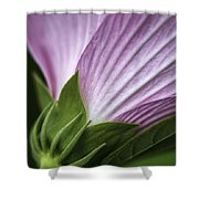 Wild Swamp Rose Mallow Shower Curtain
