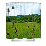 Wild Teasel In Nez Perce National Historical Park-id- Shower Curtain
