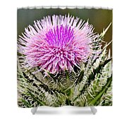 Wild Thistle  Shower Curtain