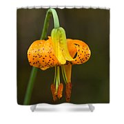 Wild Tiger Lily Shower Curtain