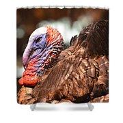 Wild Turkey 2013 Shower Curtain