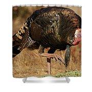 Wild Turkey Shower Curtain by Adam Jewell