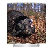 Wild Turkey Displaying Shower Curtain