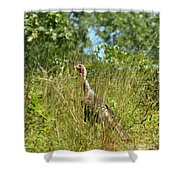 Wild Turkey In The Sun Shower Curtain