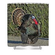 Wild Turkey Tom Shower Curtain