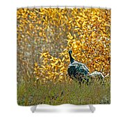 Wild Turkeys And Fall Colors Shower Curtain