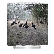 Wild Turkeys II Shower Curtain