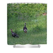 Wild Turkeys In Grass  In Kansas Shower Curtain by Robert D  Brozek
