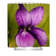 Wild Violet Shower Curtain