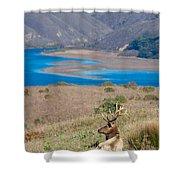 Wild Wapiti Surveying His Kingdom Shower Curtain