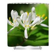 White Honeysuckle Flowers Shower Curtain