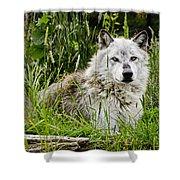 Wild Wolf Shower Curtain
